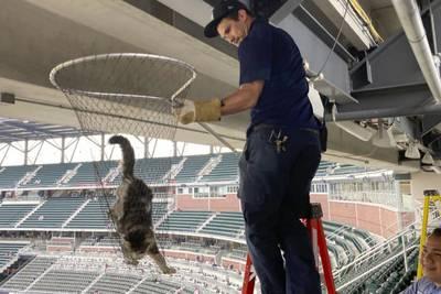Catwalk caper: Feline scurries along upper deck beam at Atlanta's Truist Park