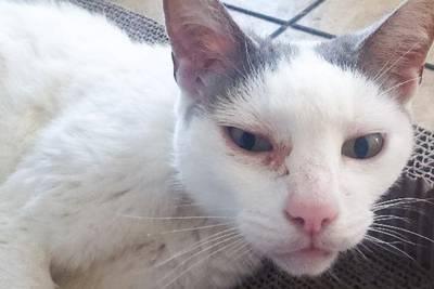 Perfect match: North Carolina woman, 101, adopts 19-year-old cat